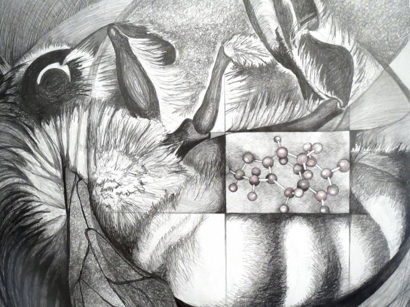 Parlato Pollinator Bee and Neonicotinoid