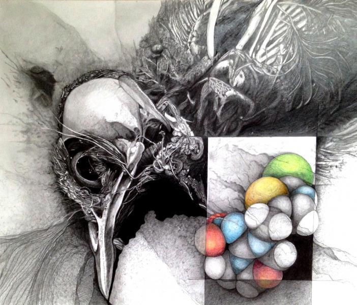 Dead Bird and Neonicotinoid Molecule