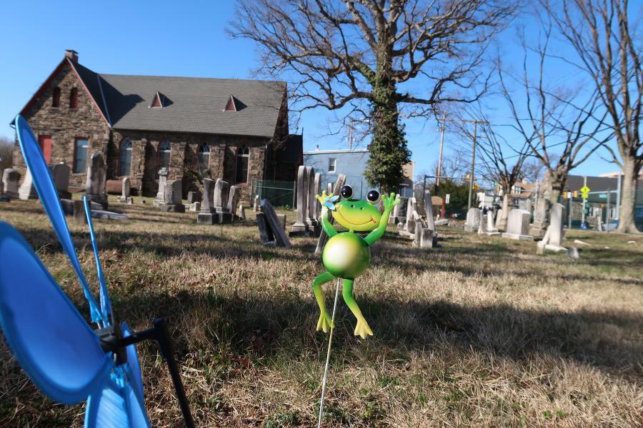 cemetery frog photo