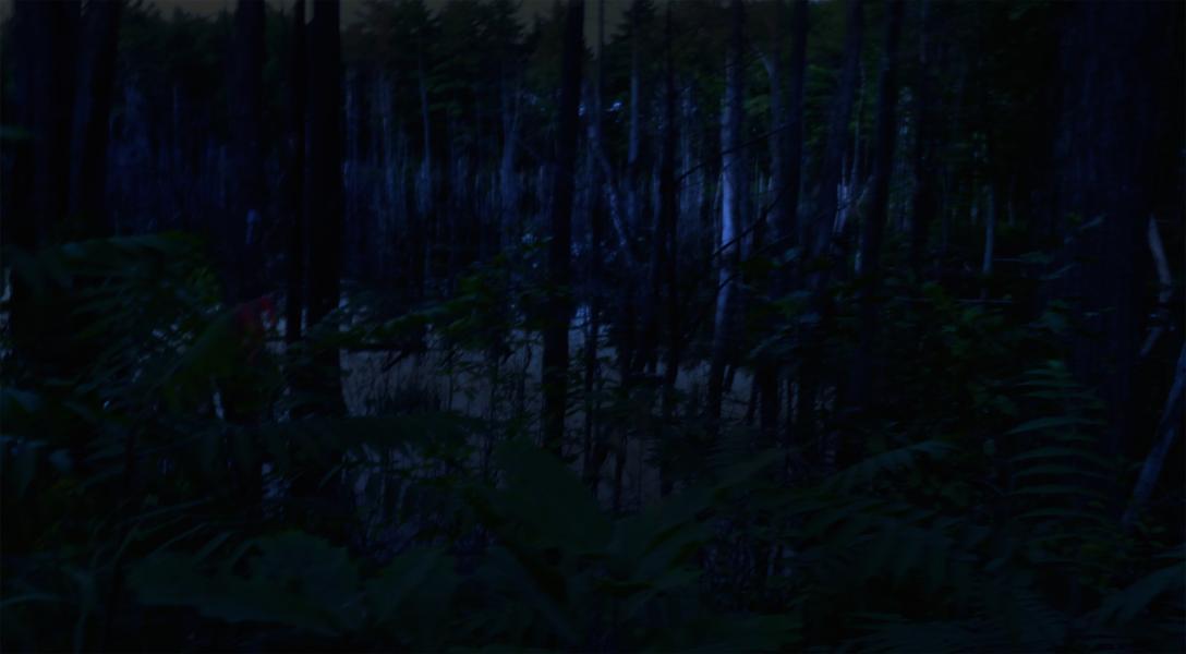 Night Bog,  2015, Archival pigmented print, 20 x 27