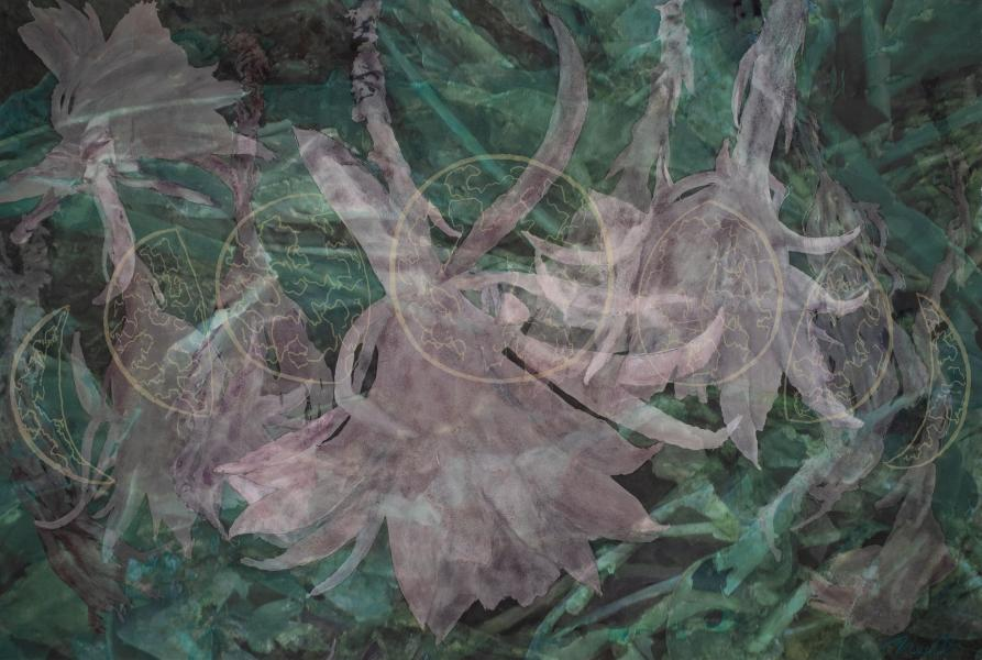 "Sido's Cactus, 2019, Watercolor, Archival Digital Print on paper and Plexiglas, 40"" x 26.75"""