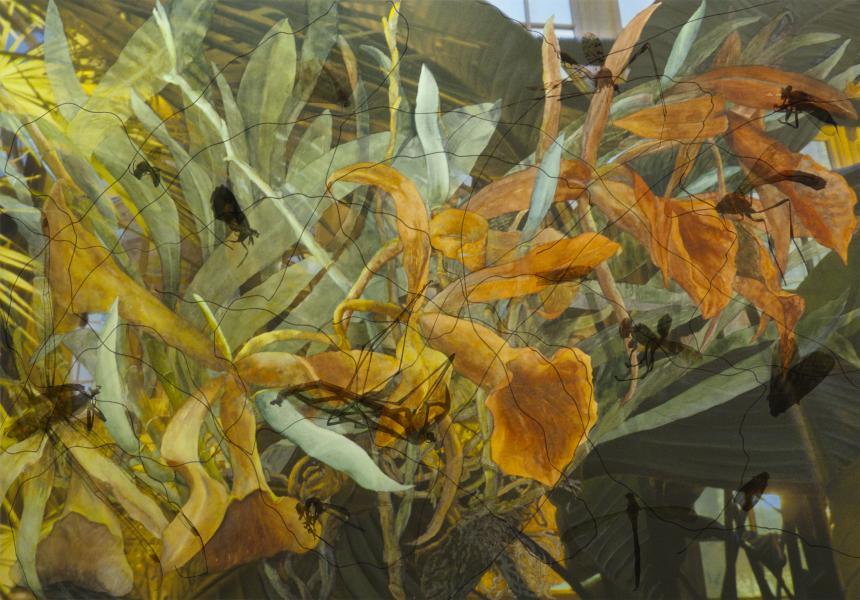 "Night Wings, 2013, Watercolor, archival ink jet print on paper & Plexiglas, 34"" x 47"""