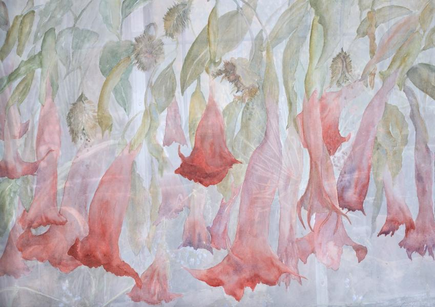 "Brugmansia, 2020, Watercolor, Archival pigment print, 24.5"" x 34.5"""