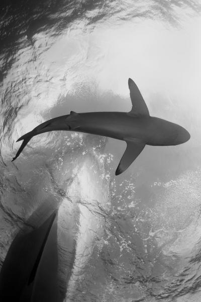Jann Rosen-Queralt, Underwater Photograph