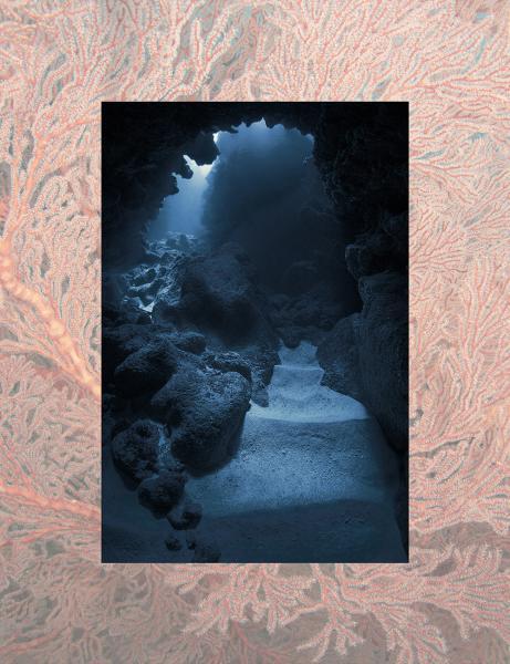 Jann Rosen-Queralt Underwater Photograph