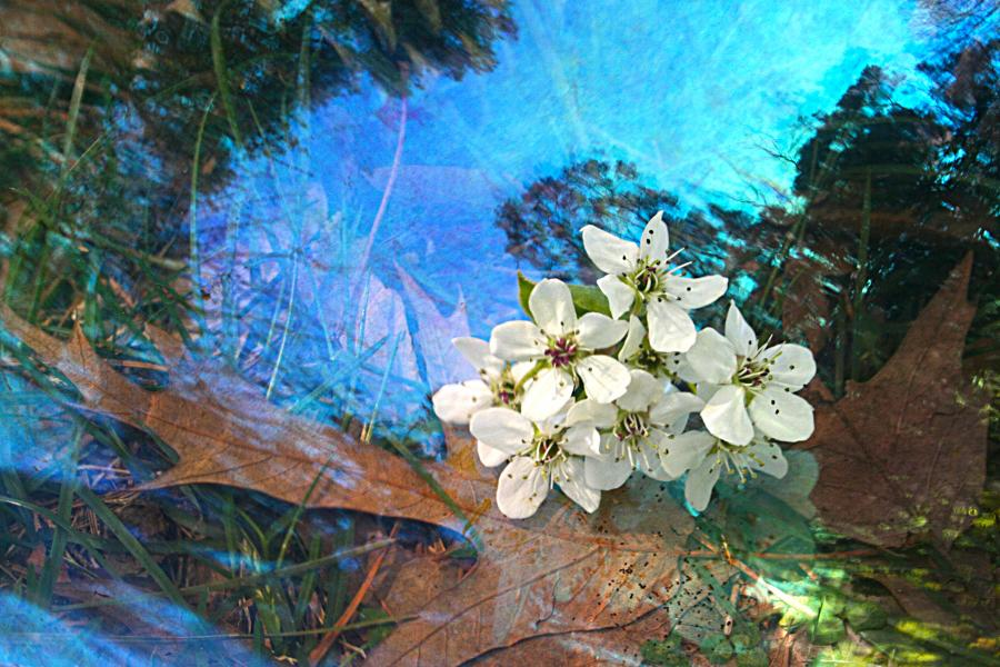 a cluster of white flowers with dryed leaves and sky