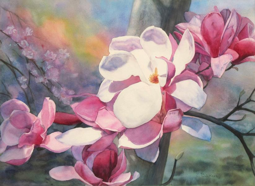 Magnolia Spotlight, watercolor painting of magnolia blossoms by Elizabeth Burin, spring, floral