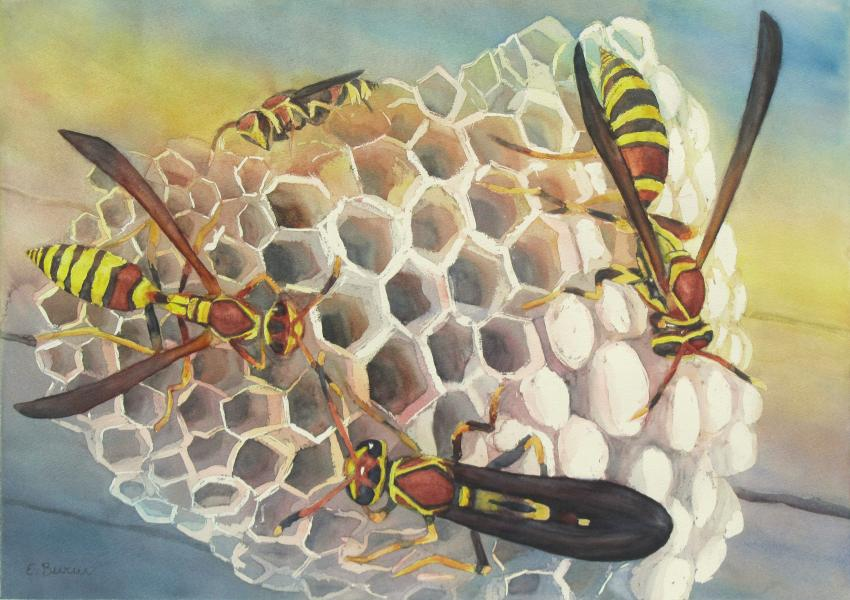 Workers, watercolor painting of wasps on nest, by Elizabeth Burin, social insects