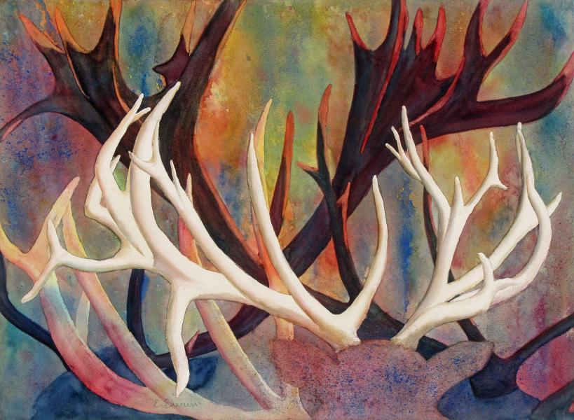 The Pride of the Hart, watercolor painting of red deer antlers by Elizabeth Burin