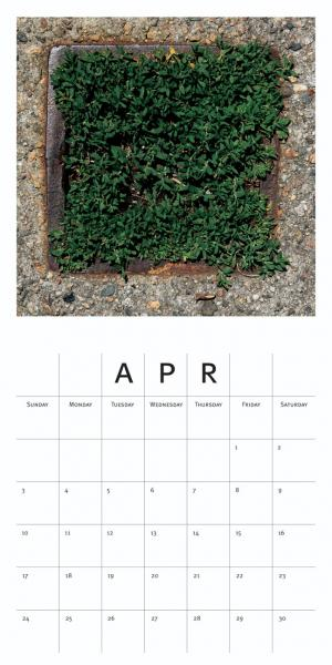 DS Mangus: April, 2016