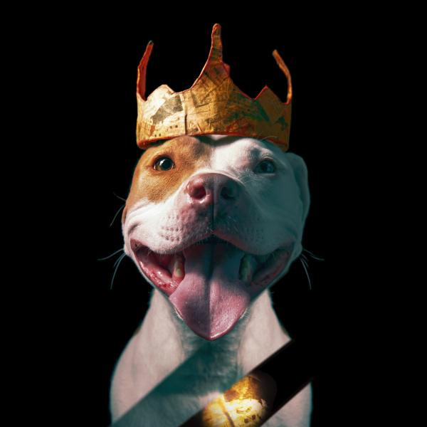 a smiling dog wearing a paper crown